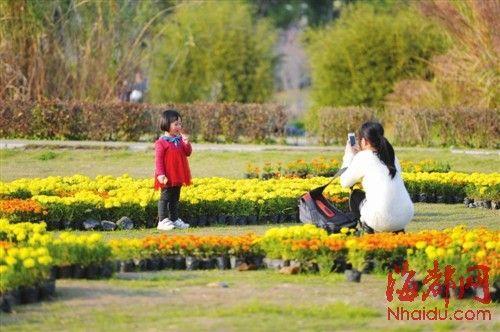福建农林大学中华植物园吸引了市民前往拍照