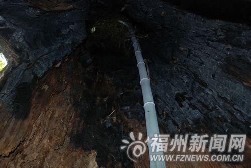 树洞的中央生长着一根青绿的翠竹