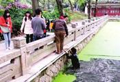 福州女童被陌生男扔进西湖里