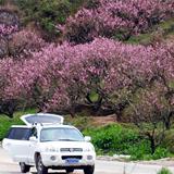 三月穆云乡带来桃花春汛