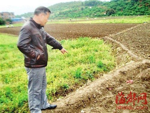 村民表示,林秋霞当时就是在这条田埂附近被雷击身亡的