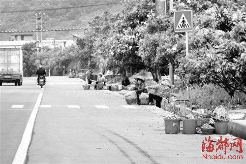324国道边摆摊卖枇杷,存在很多交通隐患