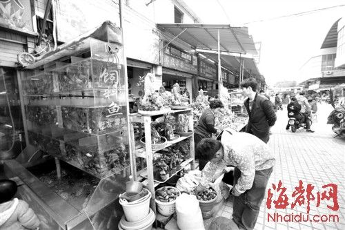 花鸟市场搬到鳌峰路上快十年了