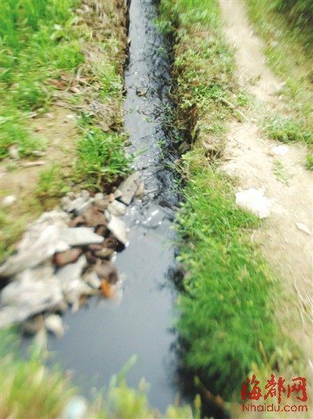 猪场排水沟与农田排水沟相连,水变得又黑又臭