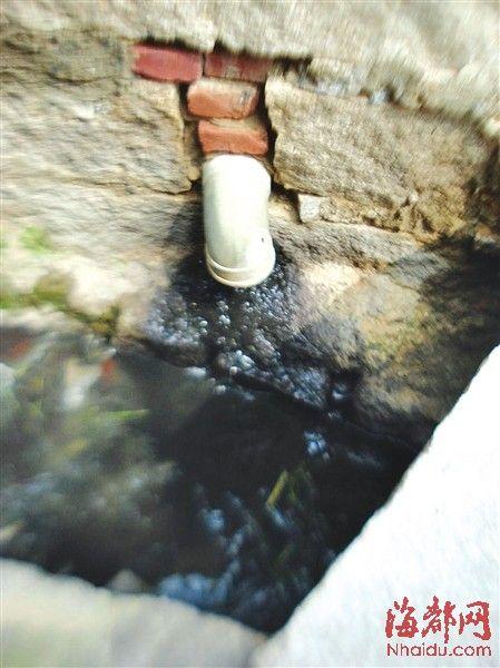 猪场唯一的排污口,每天都向外排放墨汁般的污水