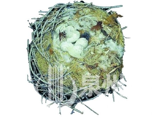 家中排气口鸟儿来筑巢 提醒:谨防通风不畅引发中毒