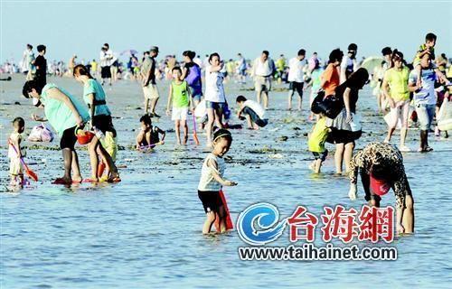千人海边挖花蛤