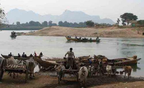 缅甸用尸体养鱼