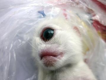 """小猫额头正中间有只""""眼""""。"""