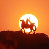 【世界上最高的跨马铜像――大坪山郑成功跨马雕像】