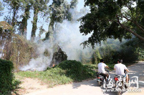 路边行道树被烧,树上爬藤也开始起火
