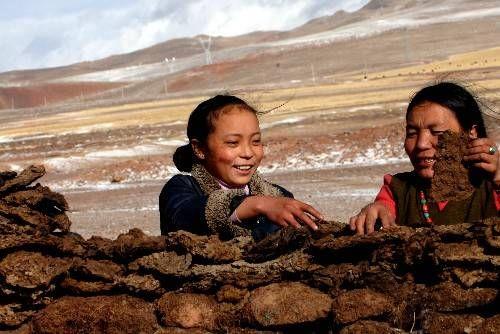在西藏人人都爱牛粪牛粪比金子更重要