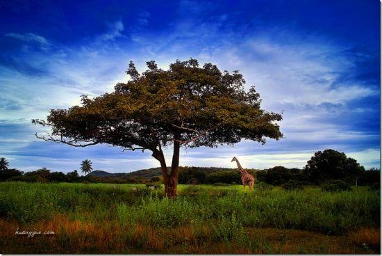 Calauit岛