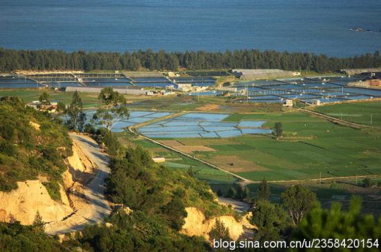 远处常常的一道木麻黄防护林身后就是大京沙滩