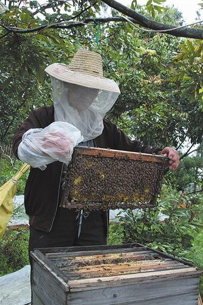 君山蜂蜜——蜂箱