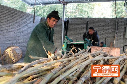 工人将甘蔗送进机器压榨出蔗汁制作红糖。