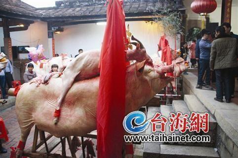 """603斤大猪夺得""""状元猪""""称号"""