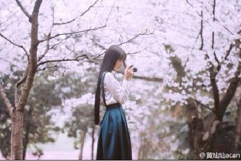 武大校花黄灿灿拍摄樱花写真