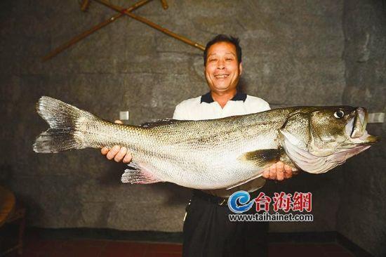 漳州渔民钓起野生大鲈鱼