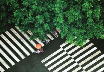 5月19日,雨中,路人打着伞从旗汛口路边的榕树下经过
