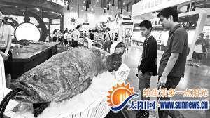 大石斑鱼重220公斤,现场最吸睛。记者 郑瑜 摄