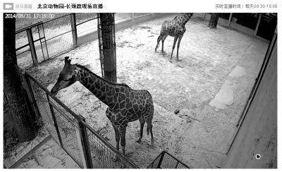 网上动物园今日上线 游客可在线看动物直播(图)