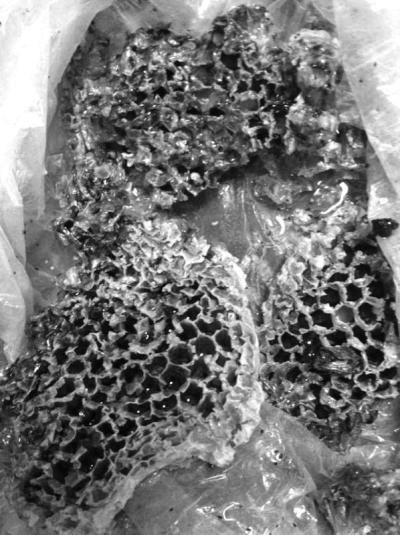 致18人中毒的部分蜂巢(网友供图奖励50元)