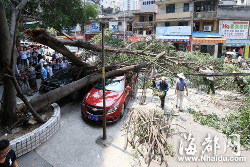 大榕树的枝干断裂,砸到两部小车