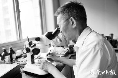 专家鉴定神秘小虫为谷斑皮蠹 其幼虫能耐饥3年