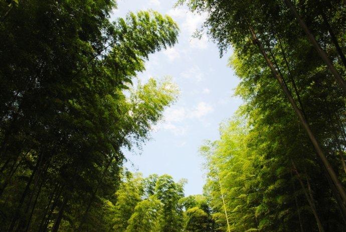 光泽竹林图片