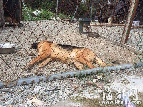 中毒死亡的名贵犬