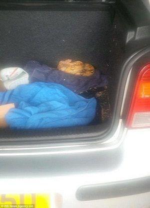 """23岁的英国女子韦斯通过网络用200英镑买下一辆二手车。当她和丈夫开开心心准备为车子大扫除时,竟在后车厢内发现随车""""附送""""一条3英尺长的红尾蚺。"""