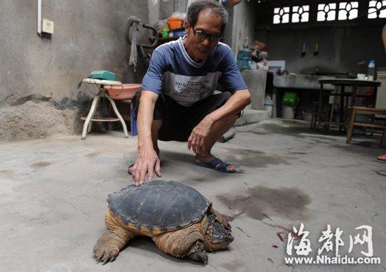 这只龟攻击性很强,把塑料盆都撞裂了