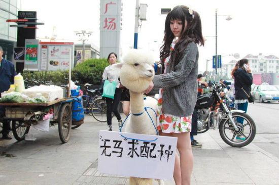微博上又曝出一条#美女溜草泥马求配种#的事件,这位上海90后妹子溜出