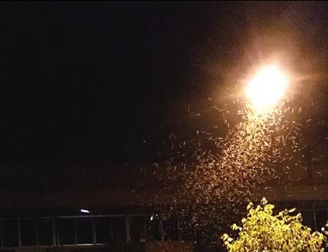 万州多个社区遭遇飞蚁突袭 密密麻麻除不尽