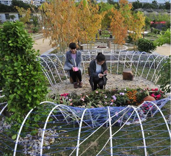 福州大学生3天巧造 微花园 轮胎当植物容器图片