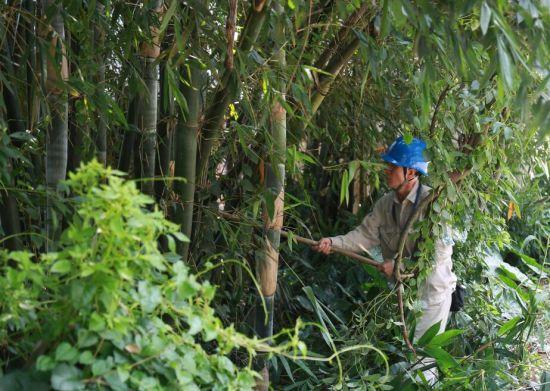 工作人员清除隐患树木