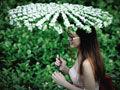 网友实地探访福州城门镇茉莉花种植基地
