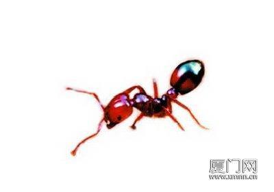 红蜘蛛安装步骤图解
