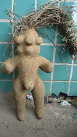 摩的司机宋师傅在莆田城区一工地附近花800元购买了一株人形何首乌