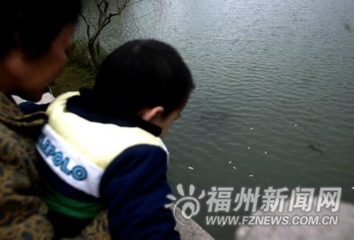 福州西湖罗非鱼冷死一片 专家:这种死鱼别吃