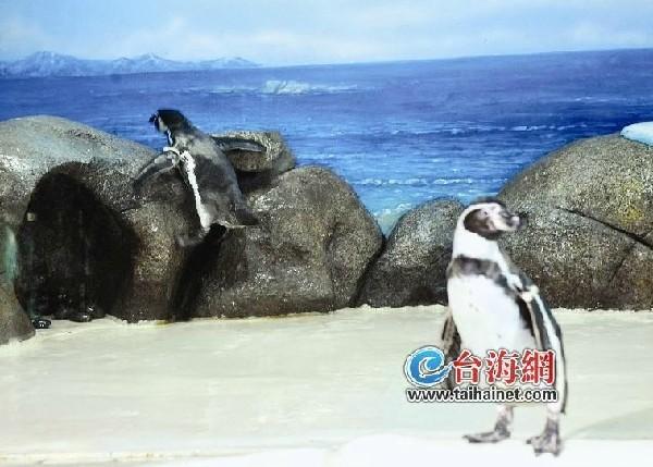 动物 企鹅 600_429