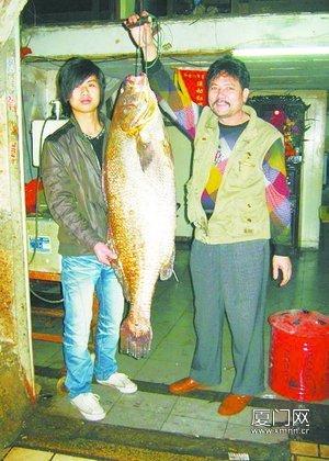 这条金丝�|鱼身长1.25米,重49.5公斤,