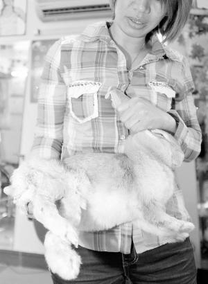 寵物兔寶寶秋季服裝設計圖