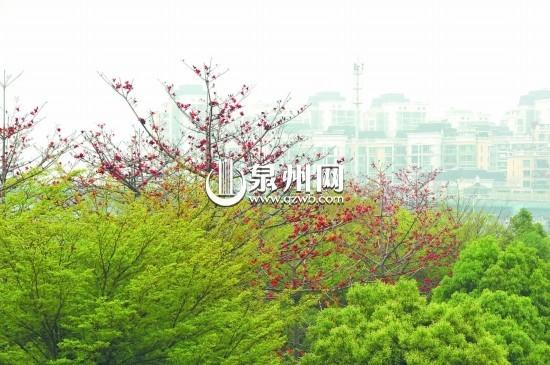 四月英雄树 木棉红连天