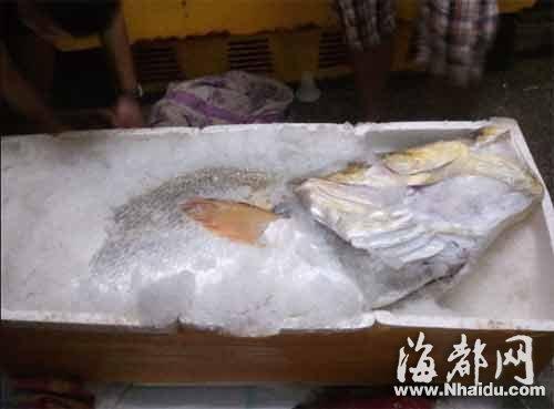 黄唇鱼重达160多斤,冰库无法容下