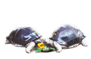 毛嘉、毛鹭一同分享水果月饼。常海军 摄