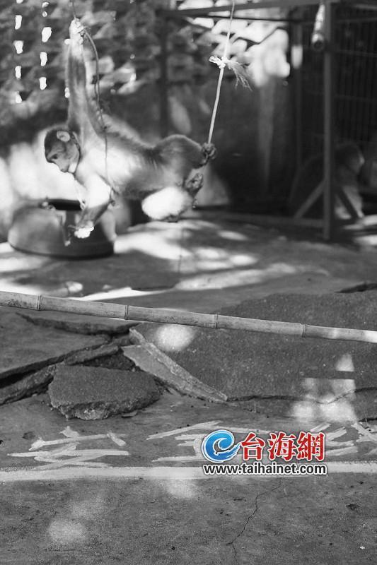 动物园用竹竿拦截,划出安全线