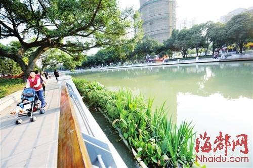 晋安河目前试种的水上植物有美人蕉、苍蒲等