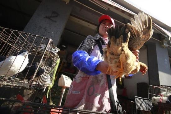 上海市场上的家禽